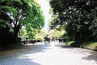 明治神宮の緑①