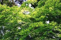 表参道の緑
