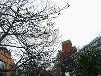 原宿駅の街路樹