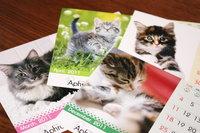 2011年度カレンダー「CAT」