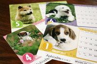 2011年度カレンダー「DOG」のサムネール画像のサムネール画像のサムネール画像
